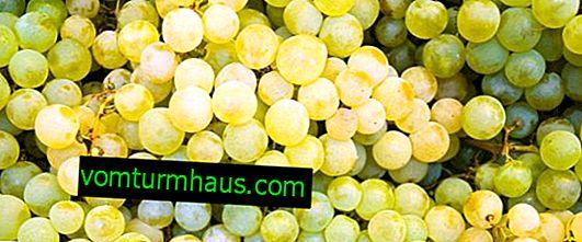 Funktioner av druvsorten rosinvit