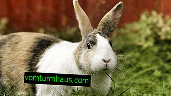 Diarrhea in rabbits: main causes, treatment and prevention