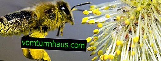 Il ruolo delle api nell'impollinazione delle piante
