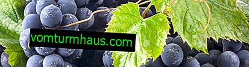 Сорт грозде Mukuzani: описание, селскостопанска техника за отглеждане