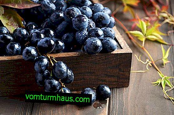 Mercedes grozdje: značilnosti in opis sorte, sajenje in nega