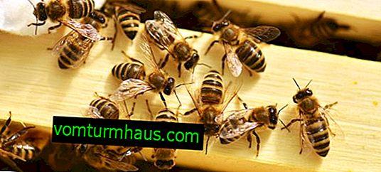 """Istruzioni per l'uso del farmaco """"Bisanar"""" per il trattamento di malattie delle api"""