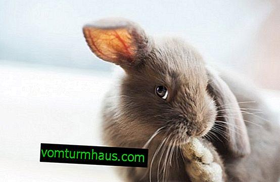 Hvordan lærer man en kanin til en bakke?