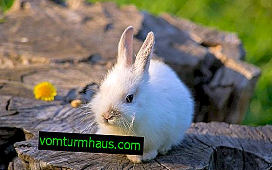 Umjetno hranjenje zečeva bez zeca