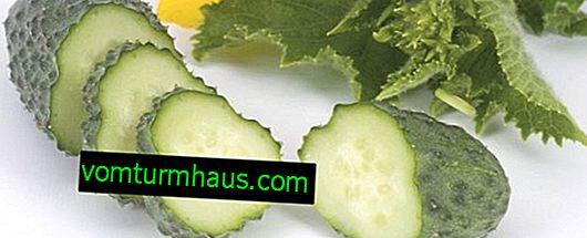 Kibria agurk: egenskaber og dyrkning af landbrugsteknikker