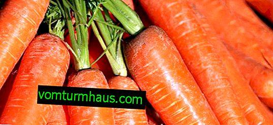 Cenouras Losinoostrovskaya 13: descrição da variedade e características de cultivo
