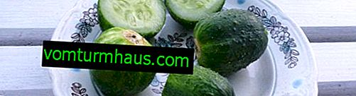 Cucumber Chupa-Shchups: description and cultivation of a variety