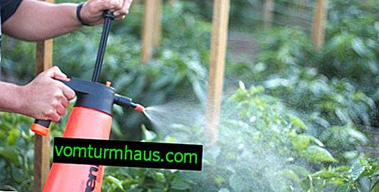 """Funktioner för bearbetning av tomater fungicid """"Penkotseb"""""""