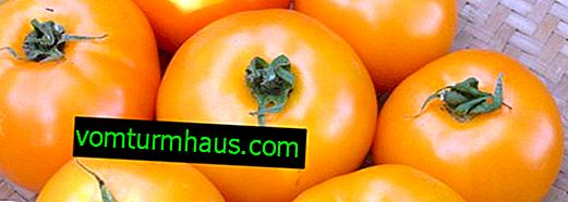 Tomates Orange: description, technologie en croissance