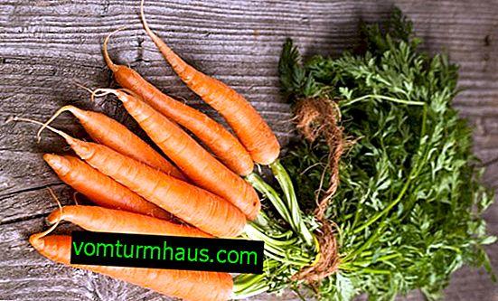Co marchew jest przydatna dla kobiecego ciała?