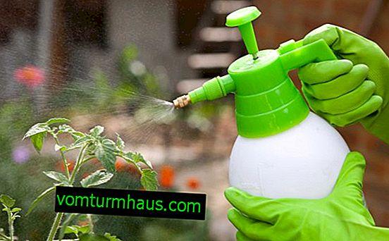 Kako predelati paradižnik z briljantno zeleno in jodom