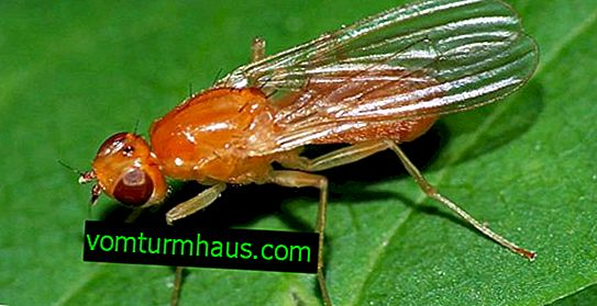 Učinkovite tehnike kontrole mrkve
