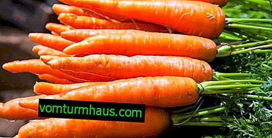 Характеристики на съхранение на моркови през зимата в избата