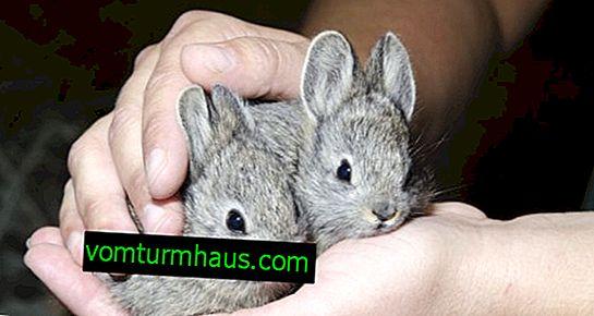 วิธีการเลี้ยงกระต่ายตัวน้อยที่บ้าน
