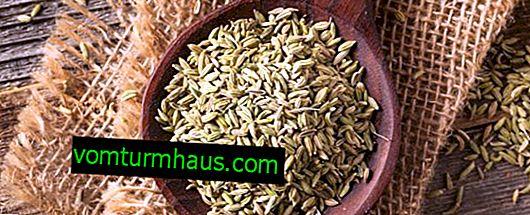 Ljekovita svojstva i kontraindikacije za uporabu sjemenki anisa