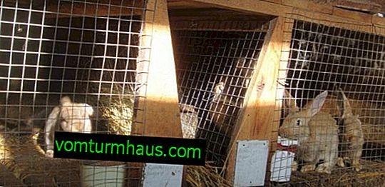 Sådan opbevares kaniner i bure