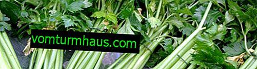 Upotreba celerove peteljke