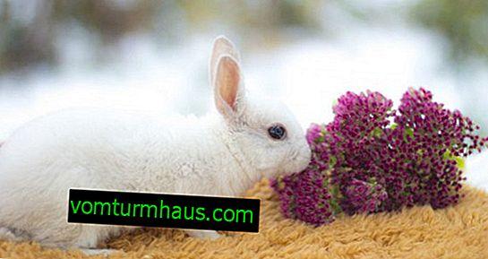 La durata media della vita dei conigli