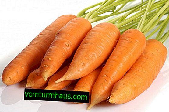 Är det möjligt för en ammande mor att äta morötter?