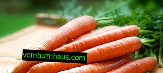 Co je mrkev: zelenina nebo ovoce?