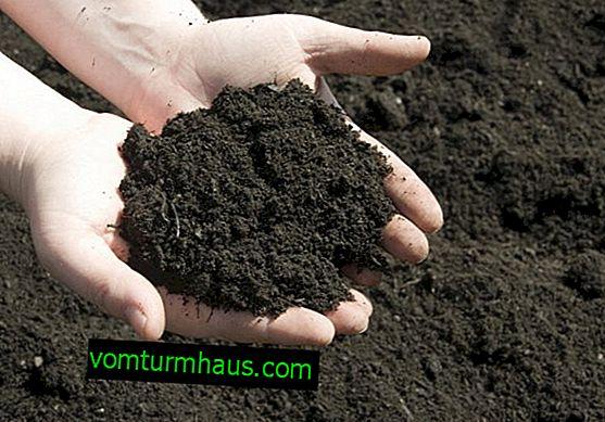 Hur mark gillar morötter och hur man förbereder den för plantering