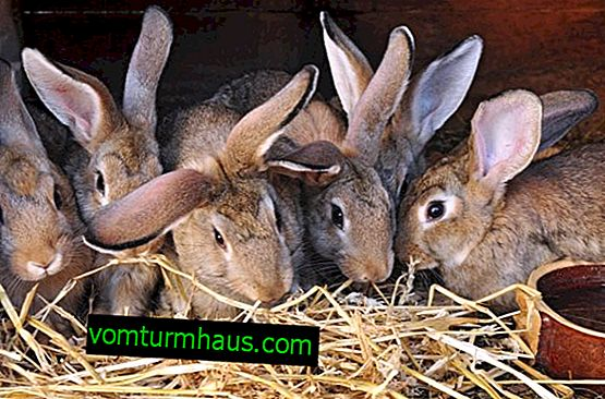Uppfödning av kaniner som företag: idéer lönsamhet, upprättande av en affärsplan för nybörjare