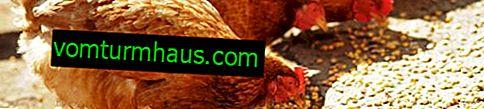 Sammensat foder til kyllinger: sammensætning, gør det-selv-madlavning, fodringsstandarder