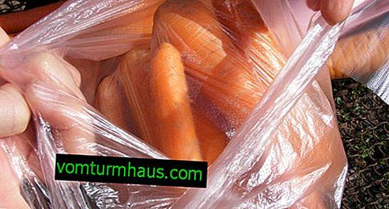 Caractéristiques de stocker les carottes dans des sacs pour l'hiver