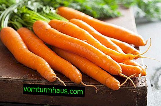 Spôsoby, ako jesť mrkvu s maximálnym prínosom pre telo