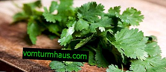 Hvad er næringsværdien af koriander