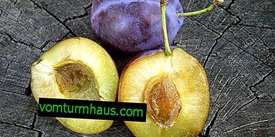 Funktioner av att växa och ta hand om Vizhen plommon