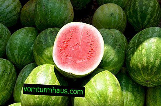 Was ist der glykämische Index für Wassermelone?