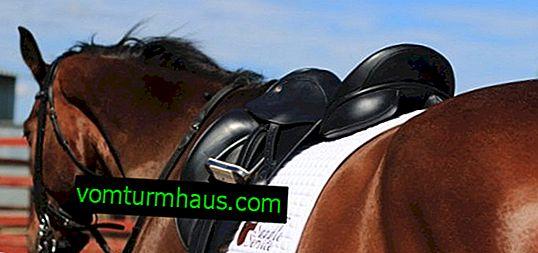 Sedlo za konja: vrste i opis kako to sami napraviti