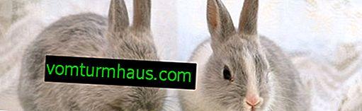 Jak vyrobit a vybavit klec pro dekorativní králíka