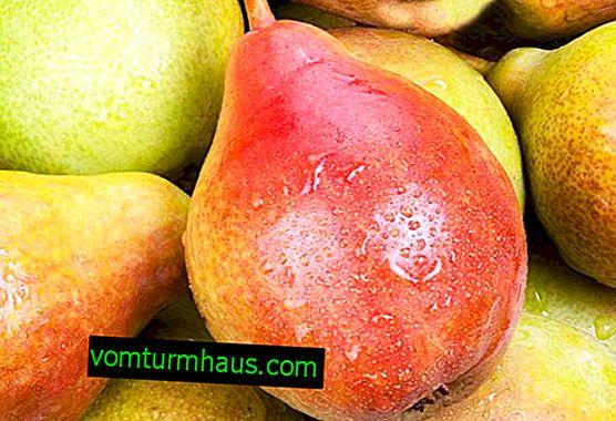 Características do cultivo de variedades de peras Bere Giffard
