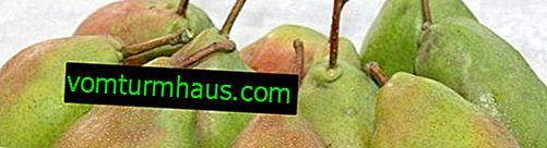 Variété de poire miracle - Description botanique et caractérisation