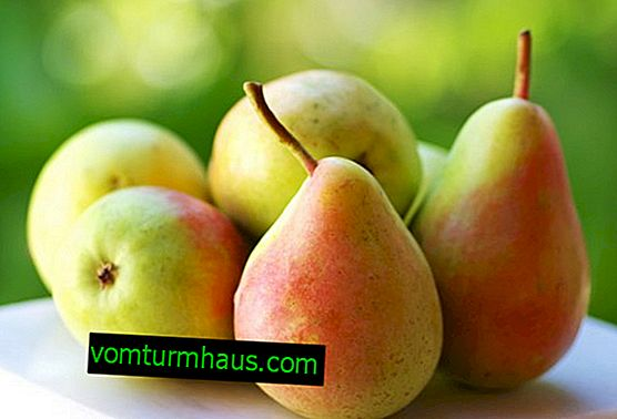 Features of the use of pears in diabetes