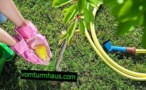 Funktioner och metoder för utfodring av körsbär