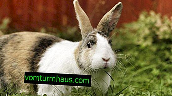 อะไรคือวิธีที่ดีที่สุดในการเลี้ยงกระต่ายพยาบาลหลังกระต่าย