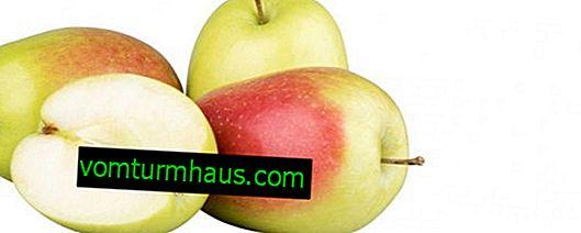 Značilnosti sajenja in skrbi za jablane Sinap