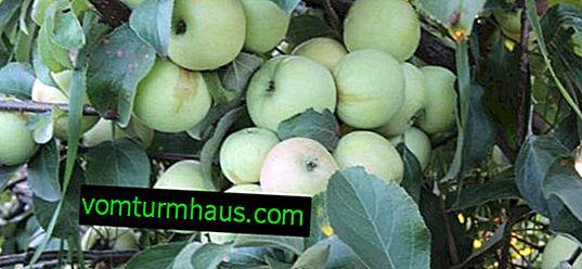 Funktioner ved Bratchud æbletræ