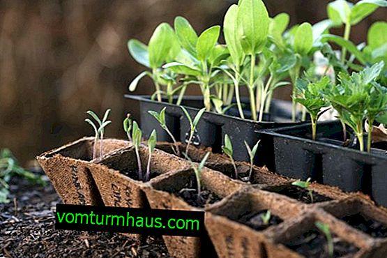 Kalendarz księżycowy do sadzenia nasion dla sadzonek w 2019 roku