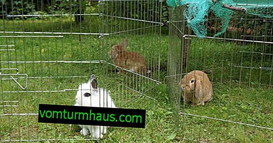 Как да си направите сам волиер за зайци