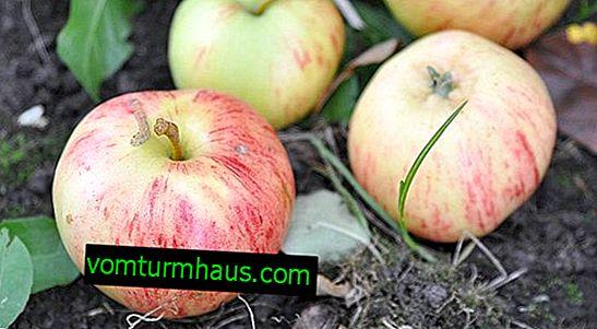 Включва сортове ябълки райета с канела