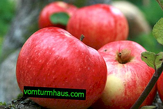 Characteristics and agricultural technology of growing apple trees
