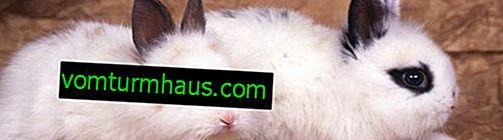 Warum sterben Kaninchen ohne ersichtlichen Grund und was soll ich tun?