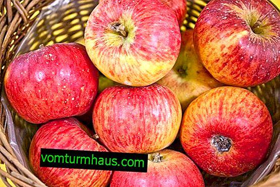Особливості посадки і догляду за яблунею сорту Топаз