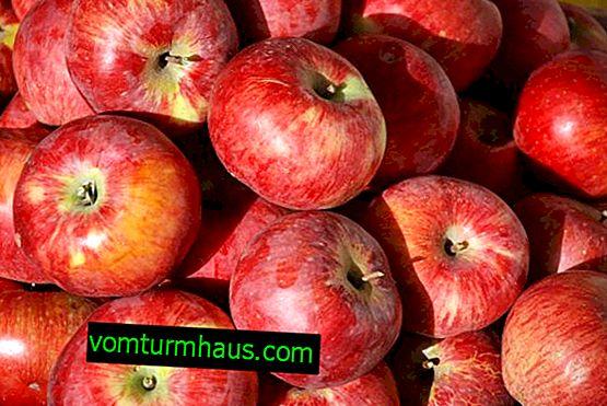 Características de siembra y cuidado de la variedad de manzana Aport