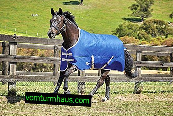 Hvordan laver man et tæppe til en hest med egne hænder?