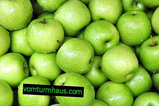 Contenido calórico y composición química de las manzanas Simirenko